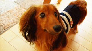 【愛犬家必読】体臭が強いワンコは短命!?乳酸菌で腸内環境を改善!
